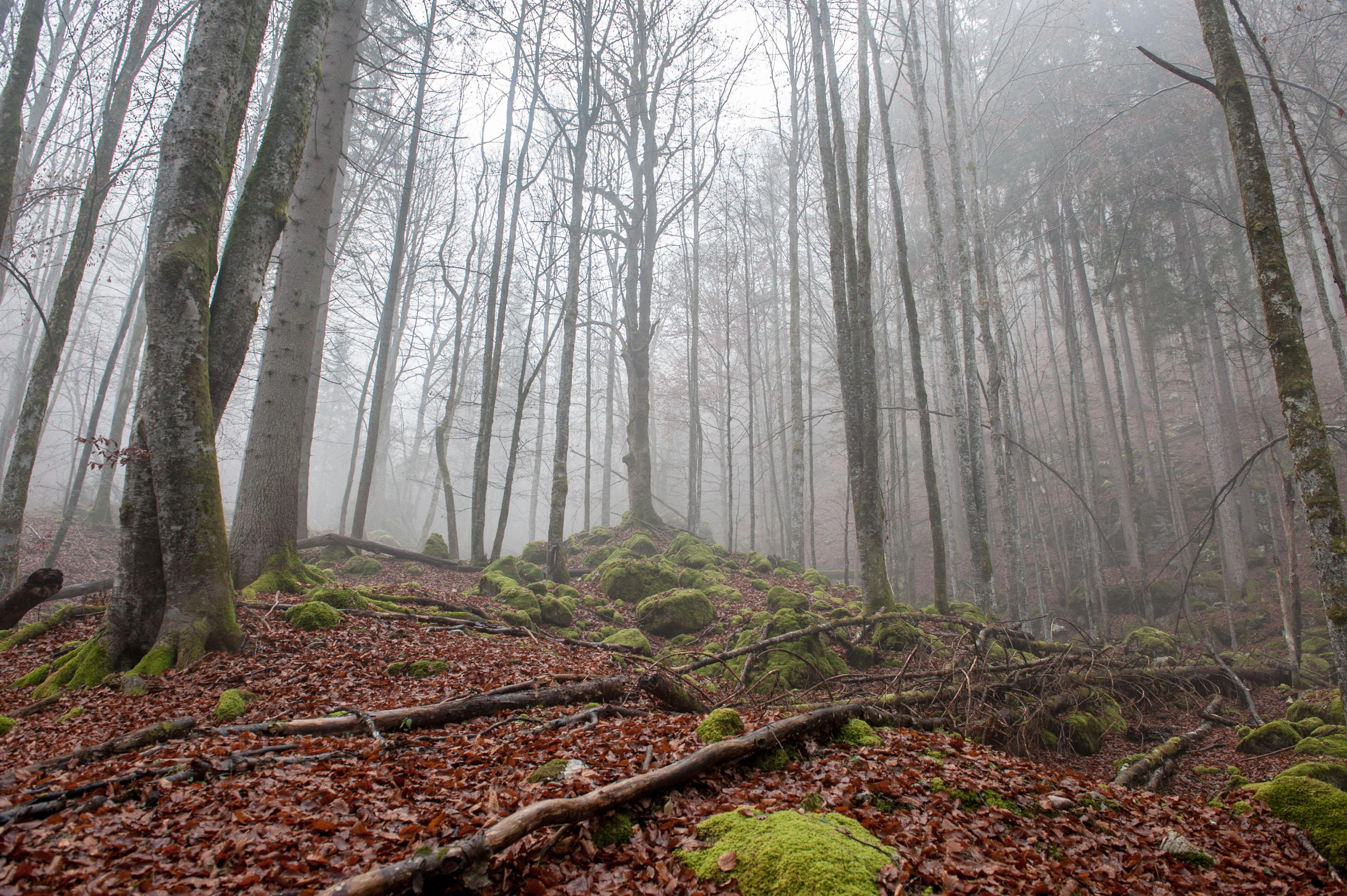 Gruselige Stimmung im nebligen Wald