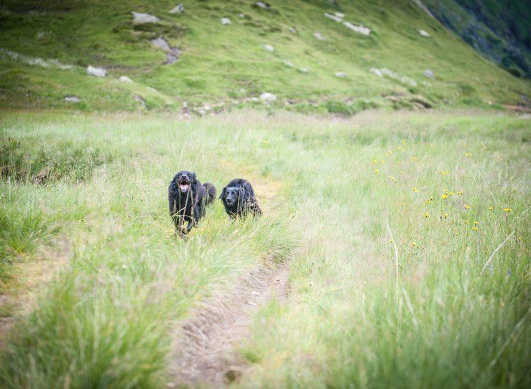 bergsteirer-wandern-im-gschnitztal-11