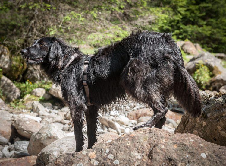 bergsteirer-wandern-im-gschnitztal-3
